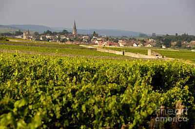 Vineyard In Front Of The Village Of Meursault. Burgundy Wine Road. Cote D'or.burgundy. France. Europ Art Print by Bernard Jaubert