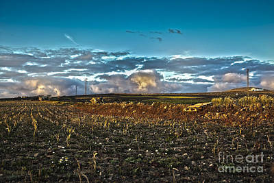 Soil Digital Art - Vineyard In Lava by Patricia Hofmeester
