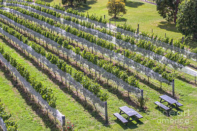 Photograph - Vineyard In New Zealand by Patricia Hofmeester