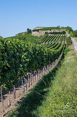 Vineyard In Rhineland Palatinate Art Print by Palatia Photo