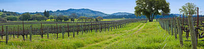 Vineyard In Sonoma Valley, California Art Print