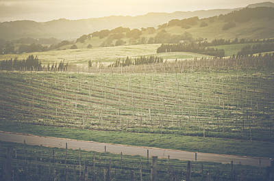 Napa Photograph - Vineyard In Spring With Vintage Instagram Film Style Filter by Brandon Bourdages