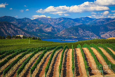 Wine Royalty-Free and Rights-Managed Images - Vineyard in the Mountains by Inge Johnsson