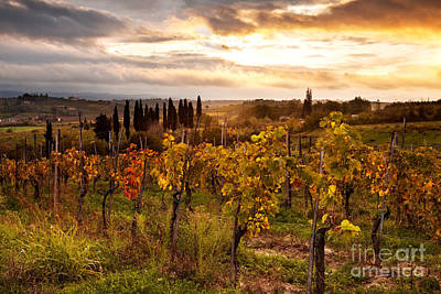 Toscana Photograph - Vineyard In Tuscany by Matteo Colombo