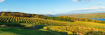Autumn Scene Photograph - Vineyard, Keuka Lake, Finger Lakes, New by Panoramic Images