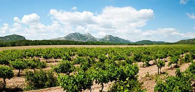 Provence Photograph - Vineyard, Les Baux De Provence by Panoramic Images