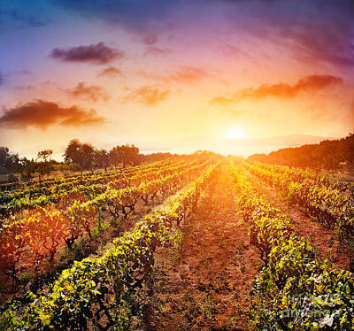 Vineyard Art Print by Mythja  Photography