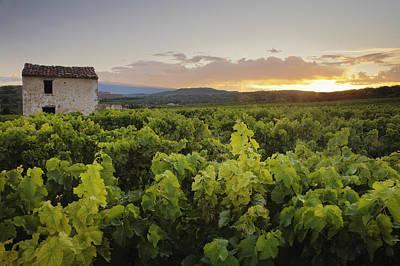 Vineyard Near Malemort-du-comtat Art Print by Andy Kerry