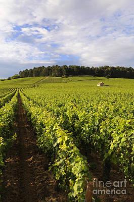 Vineyard Near Monthelie. Burgundy. France. Europe Print by Bernard Jaubert