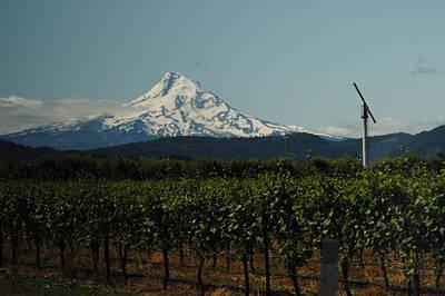 Photograph - Vineyard Near Mount Hood by Robert  Moss