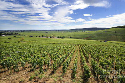 Grapevines Photograph - Vineyard Of Cotes De Beaune. Cote D'or. Burgundy. France. Europe by Bernard Jaubert