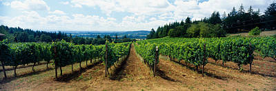 Willamette Valley Photograph - Vineyard On A Landscape, Adelsheim by Panoramic Images