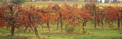 Winemaking Photograph - Vineyard On A Landscape, Apennines by Panoramic Images