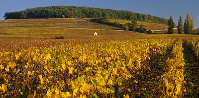 Winemaking Photograph - Vineyard On A Landscape, Bourgogne by Panoramic Images