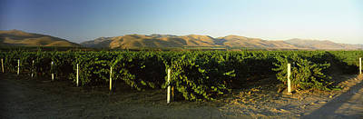 Winemaking Photograph - Vineyard On A Landscape, Santa Ynez by Panoramic Images
