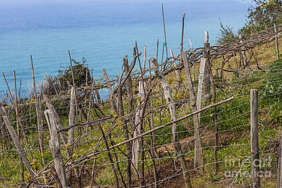 Wild And Wacky Portraits - Vineyard on a slope by Patricia Hofmeester
