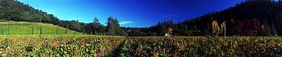 Photograph - Vineyard Panorama by Michael Courtney
