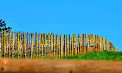 Jerry Sodorff Royalty-Free and Rights-Managed Images - Vineyard Poles 22607 by Jerry Sodorff