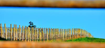 Jerry Sodorff Royalty-Free and Rights-Managed Images - Vineyard Poles 22616 by Jerry Sodorff