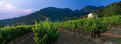 Winemaking Photograph - Vineyard, Provence-alpes-cote Dazur by Panoramic Images
