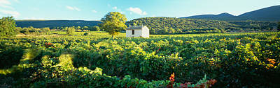 Vineyard Provence France Art Print by Panoramic Images