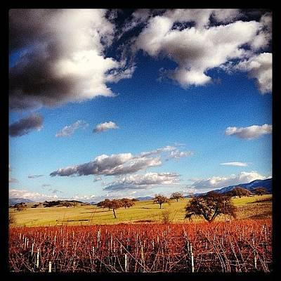 Vineyard Photograph - Vineyard by Roberto Liera