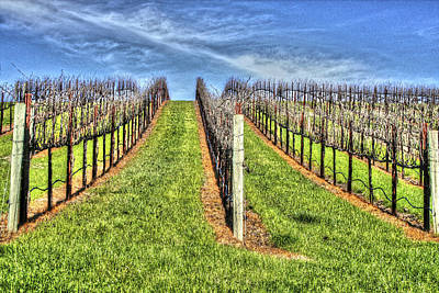 Photograph - Vineyard Bodega Bay by SC Heffner