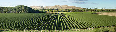 Hawkes Bay Photograph - Vineyard Seen From Breckenridge Lodge by Panoramic Images