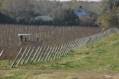 Vineyard Southold New York Art Print