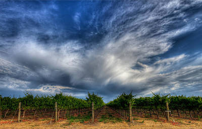 Grapevine Photograph - Vineyard Storm by Beth Sargent