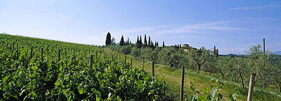 Wine Scene Photograph - Vineyard, Tuscany, Italy by Panoramic Images