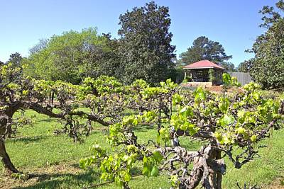 Photograph - Vineyard View by Gordon Elwell