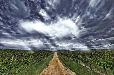 Outerspace Patenets Rights Managed Images - Vineyard Walk Royalty-Free Image by Thomas Born