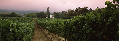 Vineyard With A Cape Dutch Style House Art Print by Panoramic Images
