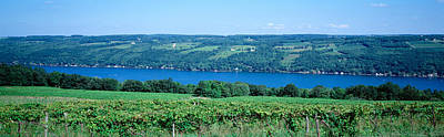 Keuka Photograph - Vineyard With A Lake In The Background by Panoramic Images