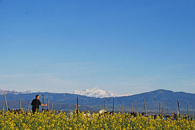 Photograph - Vineyard With A View by Ankya Klay
