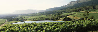 Winemaking Photograph - Vineyard With Constantiaberg Mountain by Panoramic Images