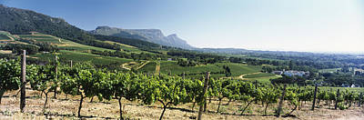 Table Mountain Photograph - Vineyard With Constantiaberg Range by Panoramic Images