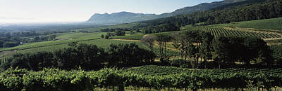 Winemaking Photograph - Vineyard With Mountains by Panoramic Images