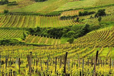 Vineyards Above Ammerschwihr France Print by Greg Matchick