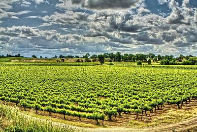 Photograph - Vineyards Almost Ripe by SC Heffner
