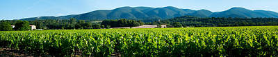 Winemaking Photograph - Vineyards Along D27, Vaugines by Panoramic Images