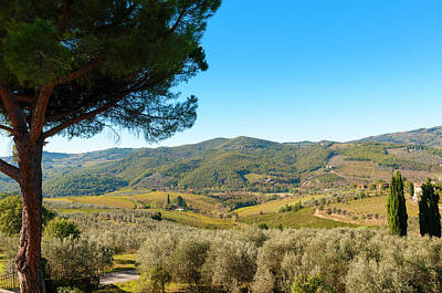 Vineyards And Olive Groves, Greve Art Print by Nico Tondini