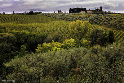 Photograph - Vineyards And Olives by Fran Gallogly