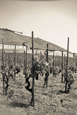 Photograph - Vineyards Chapotier by Matthew Pace