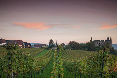 Cultivated Plant Photograph - Vineyards In Autumn At Dusk by Panoramic Images