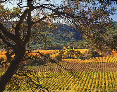 Photograph - 4b6387-vineyards In Autumn by Ed  Cooper Photography