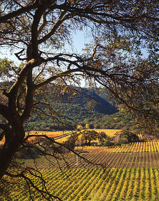 Photograph - 4b6388-vineyards In Autumn V by Ed  Cooper Photography