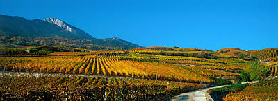 Winemaking Photograph - Vineyards In Autumn, Valais Canton by Panoramic Images
