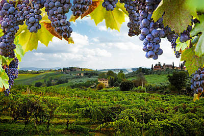 Wine Grapes Photograph - Vineyards In San Gimignano Italy by Susan Schmitz